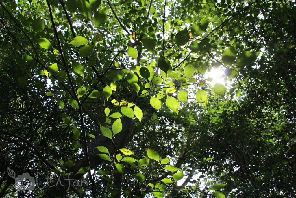 篠栗九大の森、木漏れ日のイメージ写真