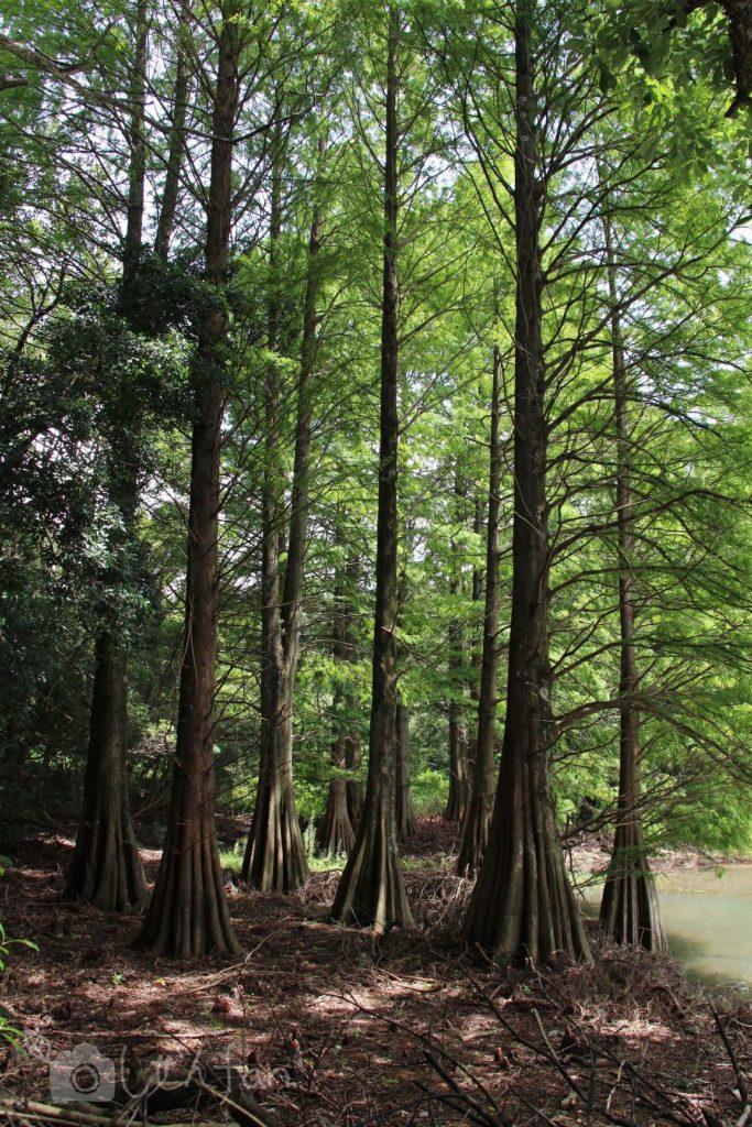 篠栗九大の森、水辺の森2019年9月の様子