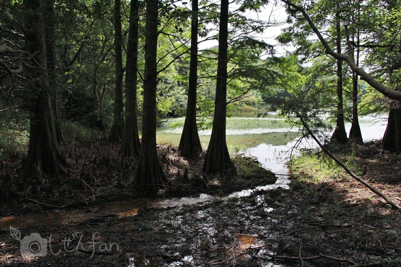 篠栗九大の森、ヌマスギと沼のイメージ写真