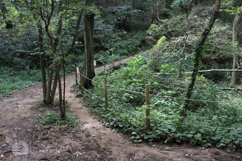 篠栗九大の森、遊歩道の上り坂