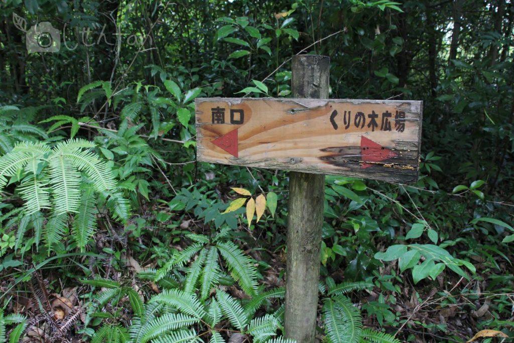 篠栗九大の森、南口とくりの木広場との分岐点
