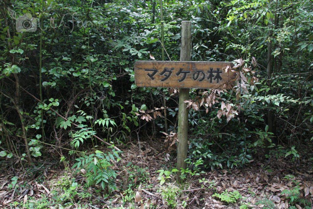 篠栗九大の森、マダケの林の立て看板
