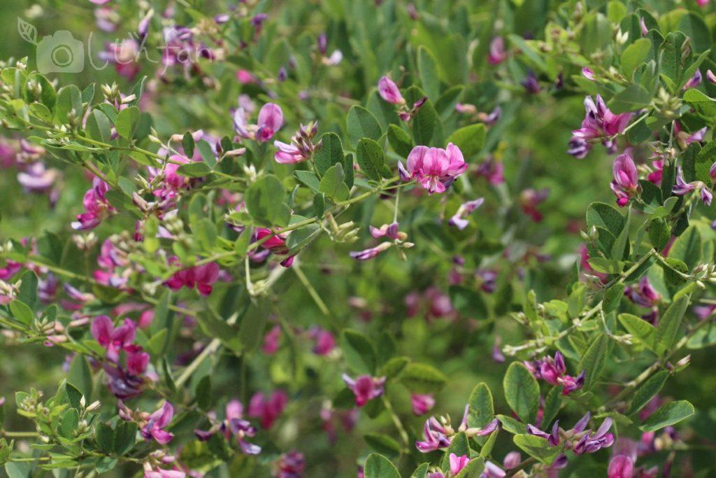 篠栗九大の森の遊歩道沿いにあったピンクの花