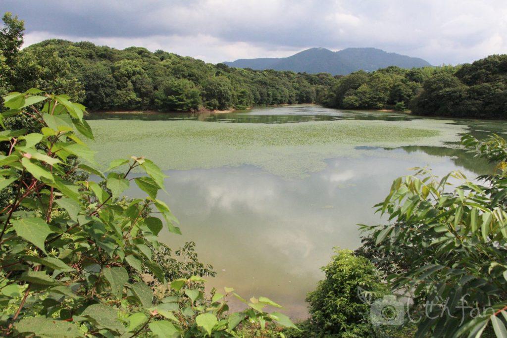 篠栗九大の森、北口近くの遊歩道から見える池の様子