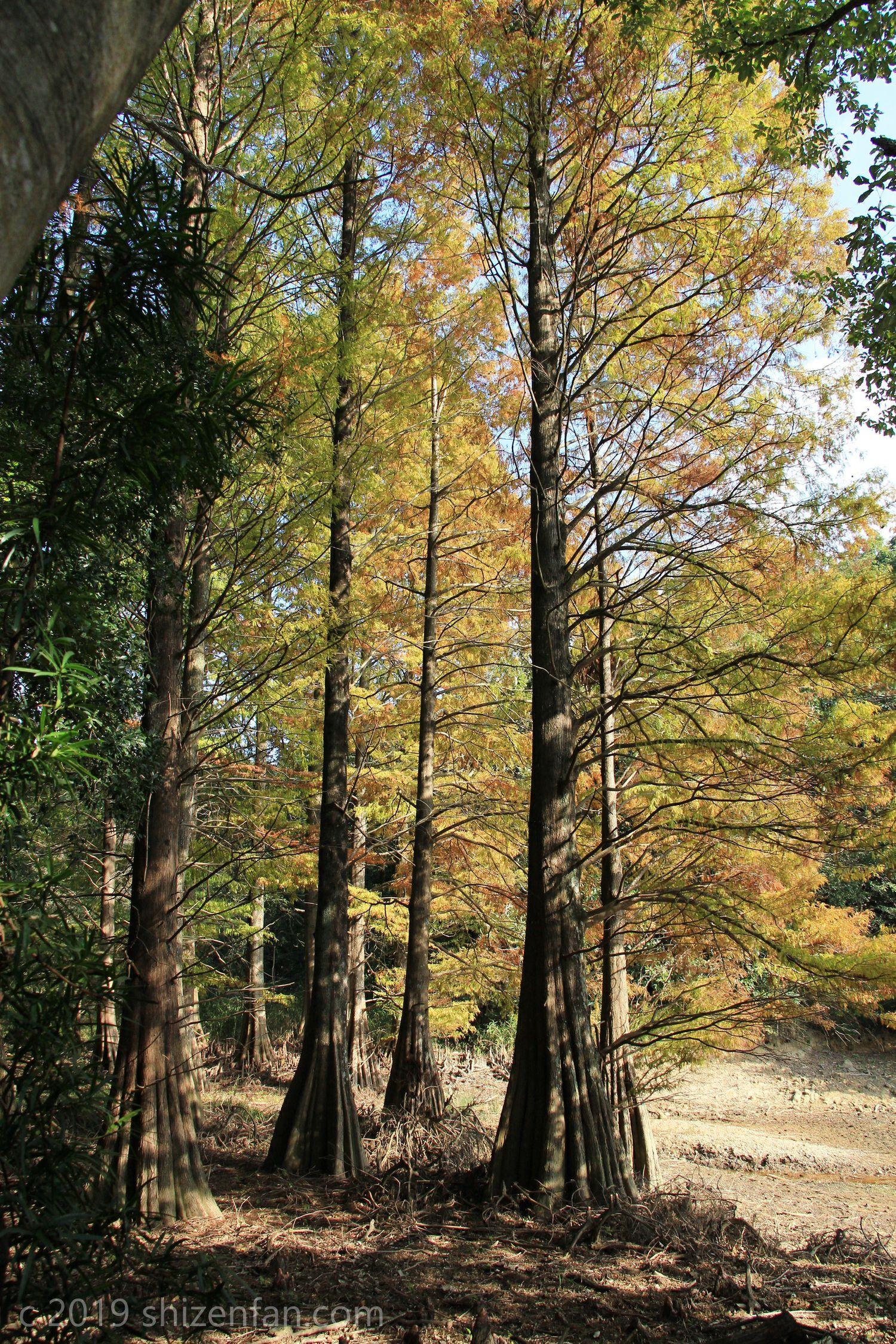 篠栗九大の森 秋の水辺の森
