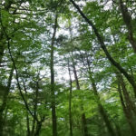 青木ヶ原樹海、森のイメージ写真