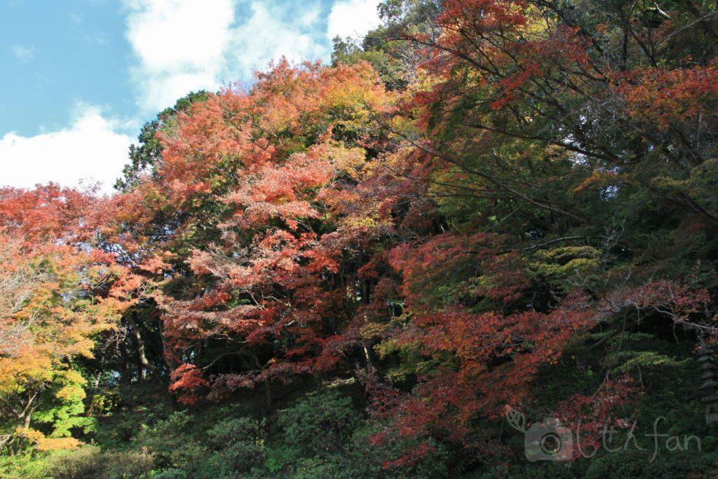 麻生大浦荘の紅葉