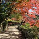 武雄・御船山楽園の紅葉