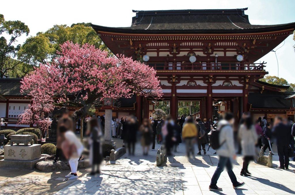 太宰府天満宮楼門と梅の花