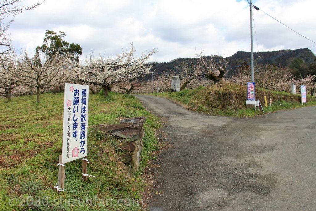日田大山おおくぼ台梅園散策路入口の様子