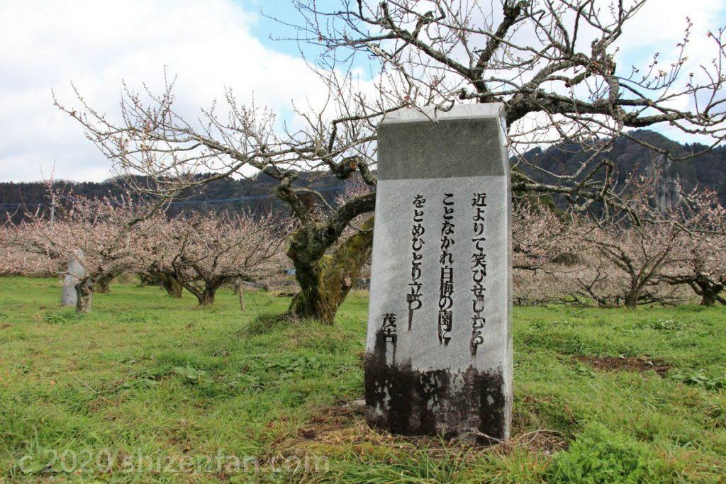 日田大山おおくぼ台梅園にある斎藤茂吉歌碑