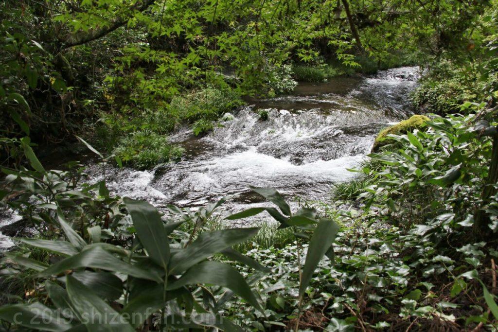 白川水源で見られる白川源流