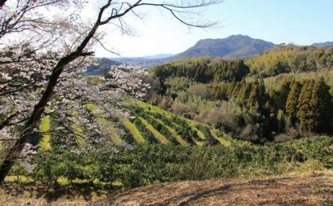 田原坂公園から望む田原坂(三の坂)と桜