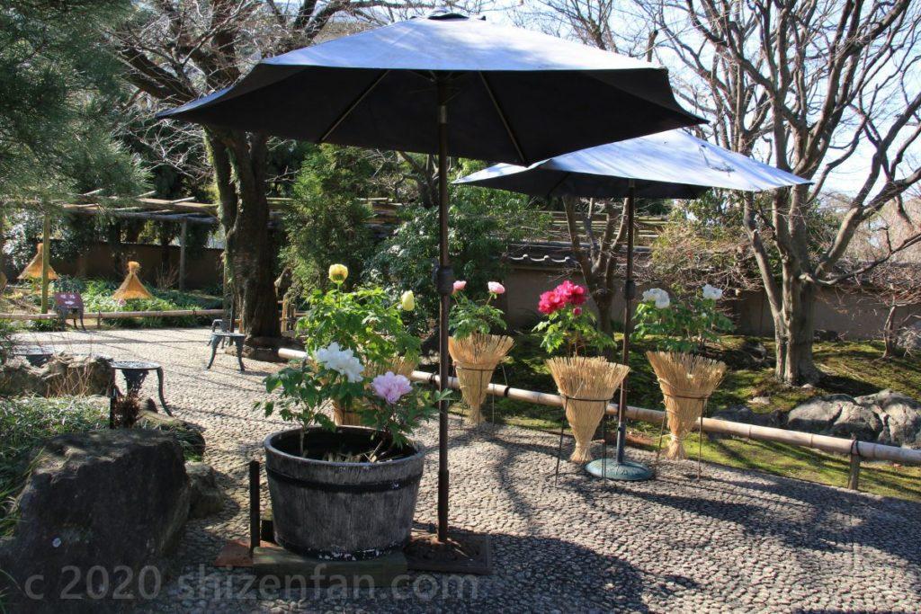 冬ぼたん開花中の筥崎宮花庭園、園内の様子(福岡市東区)