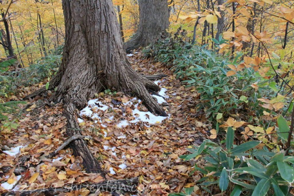 秋の札幌円山登山道に少し残る雪