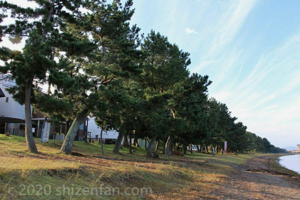 彦根・松原水泳場の松並木