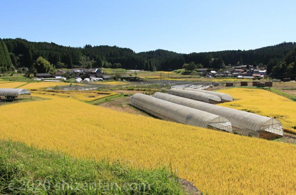 秋の熊本山間部に広がる黄金の田んぼ