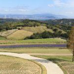 あわじ花さじきの風景(丘、遊歩道、六甲山、神戸の街)