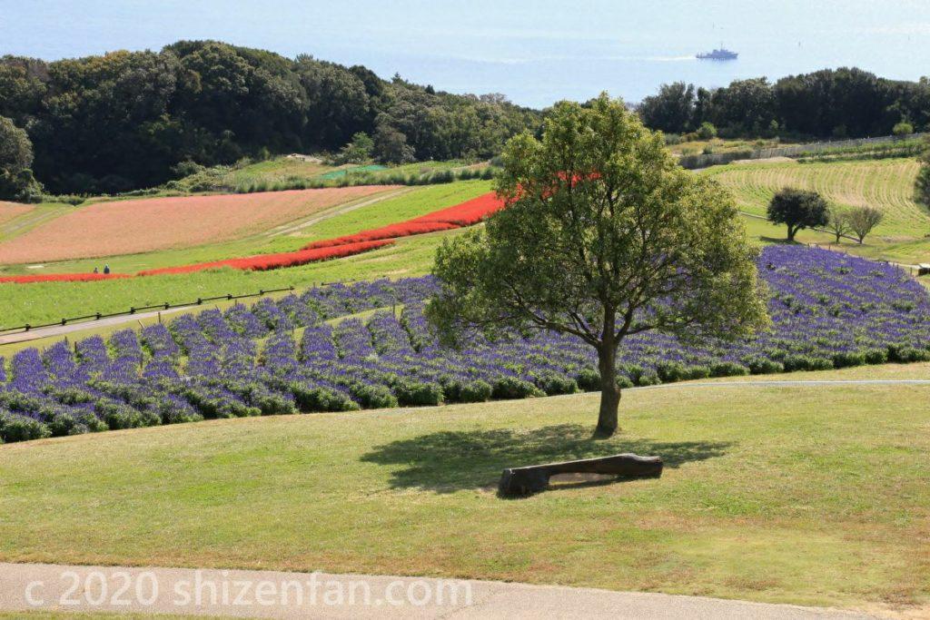 あわじ花さじきの丘陵に立つ一本の木