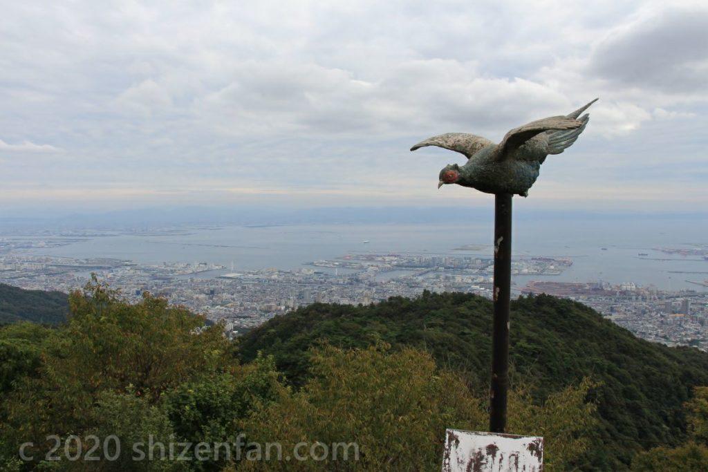 六甲・天覧台の鳥