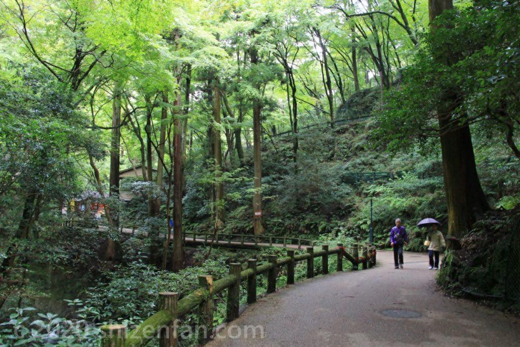 背の高い木々に囲まれた箕面公園の遊歩道と、ウォーキング中の一組の夫婦