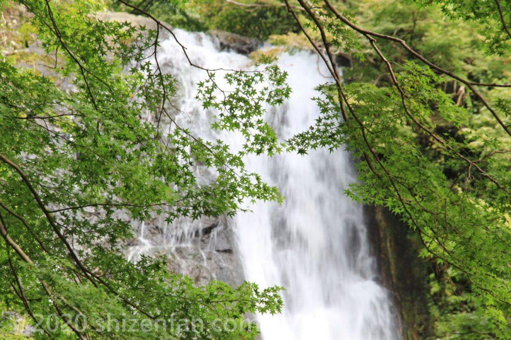箕面大滝と青もみじのイメージ