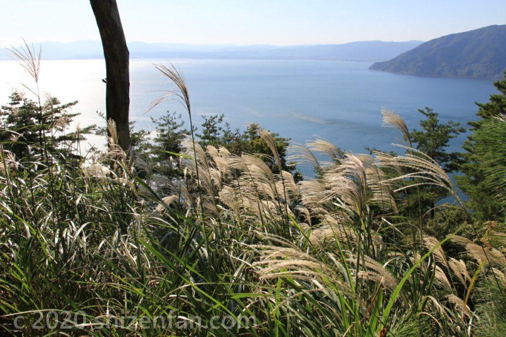 奥琵琶湖と風になびくススキ
