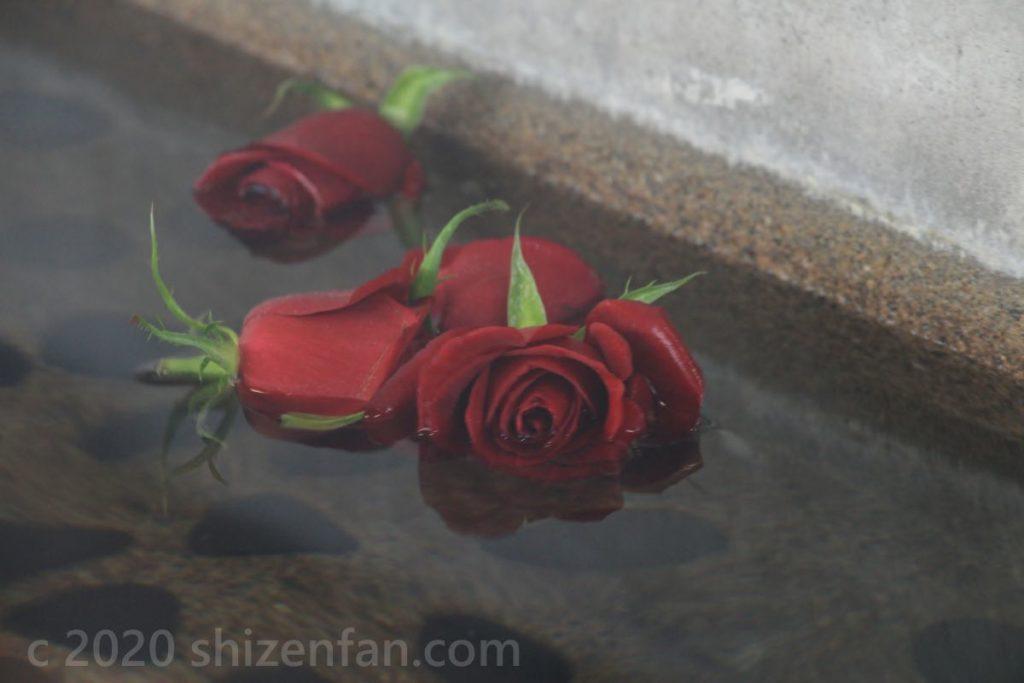 道の駅メルヘンおやべの足湯に浮かぶバラの花