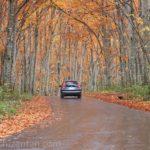 乳頭温泉競・紅葉するブナ林の中の道を走り抜けていく一台の車
