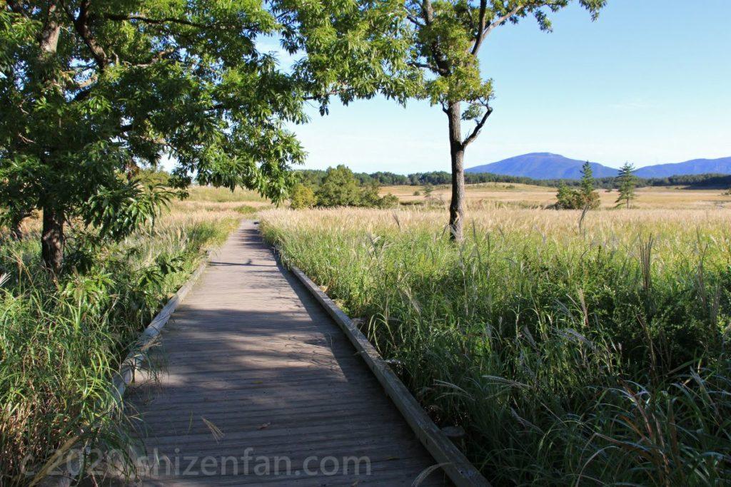 くじゅう・タデ原湿原の木道