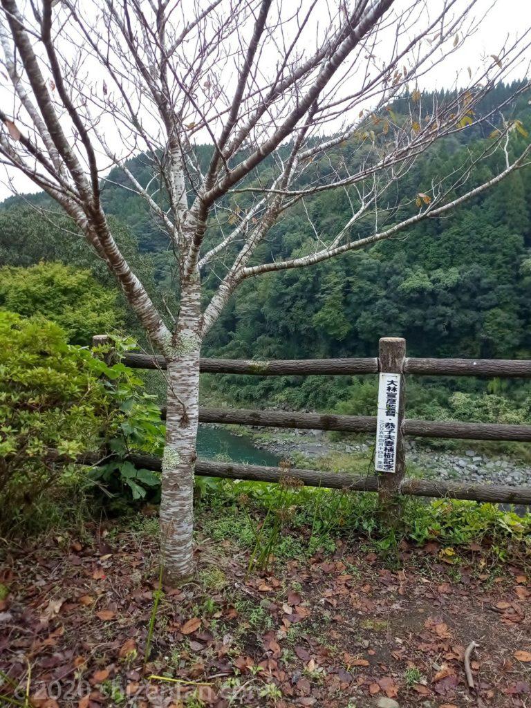 ちんだの滝ふれあい公園にある大林宣彦監督夫妻の植樹した桜の木