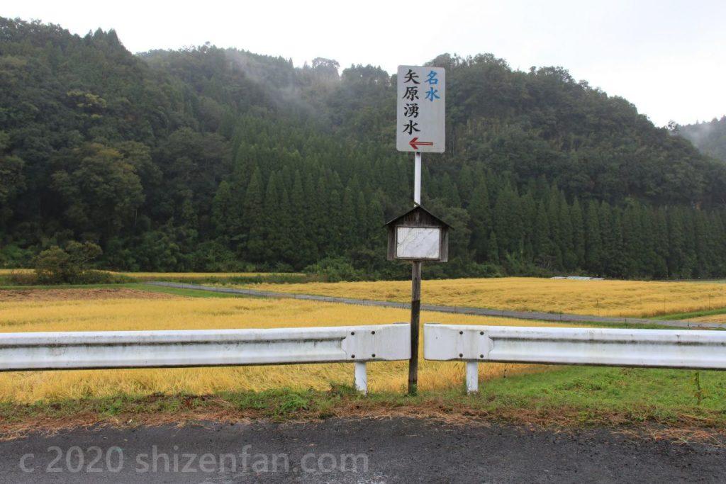 金色の田の前に立つ矢原湧水の道順案内看板