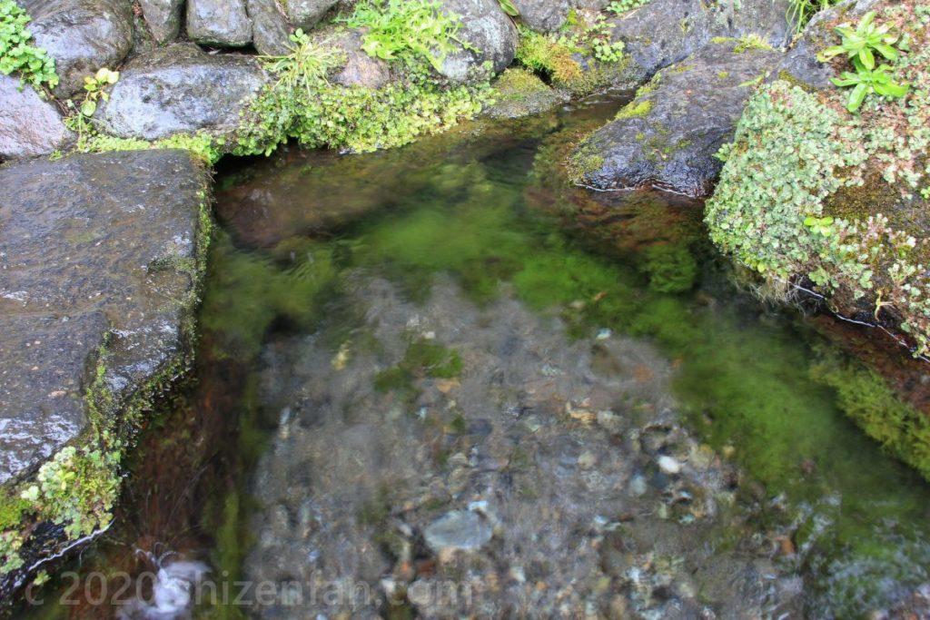 泉水湧水(竹田湧水群)