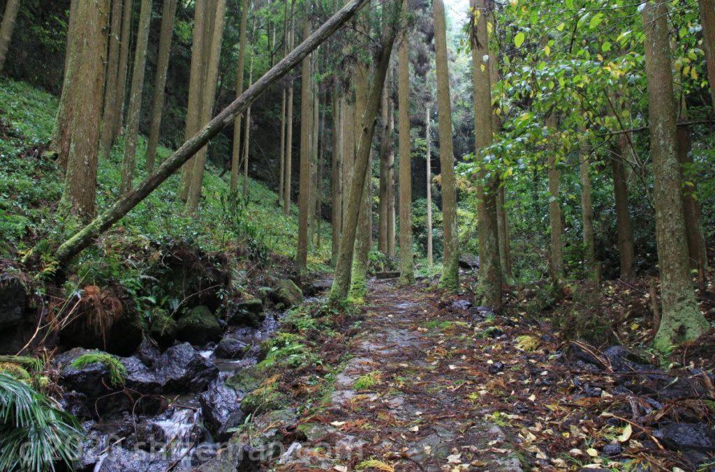 長小野鳴瀧湧水(竹田湧水群)水源周辺の森の中