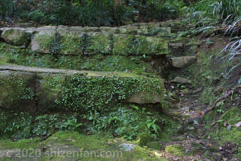 草や苔に覆われた宇和島城の石段