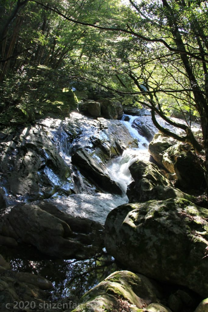 木漏れ日差す滑床渓谷