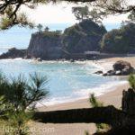 松の枝越しの高知・桂浜