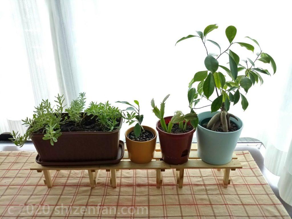 光溢れる窓際に置かれた観葉植物