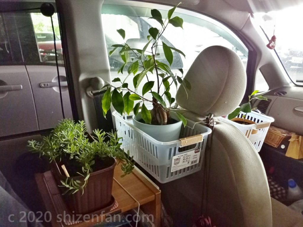 車内に配置された観葉植物