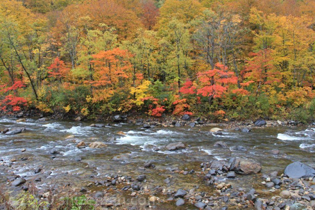 新潟と福島の県境・金泉橋付近の紅葉
