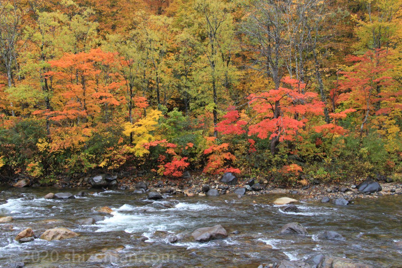 川と色とりどりの紅葉(金泉橋付近)