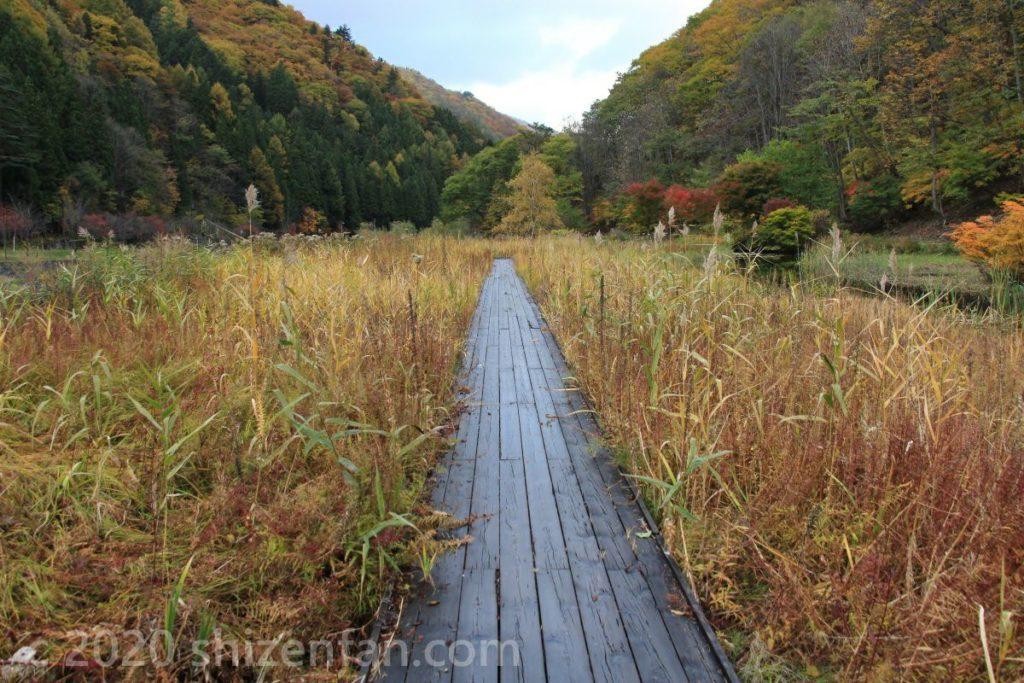 10月下旬のミニ尾瀬公園内の木道