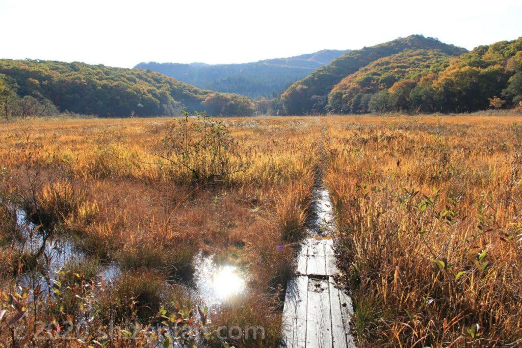 朝の宮床湿原