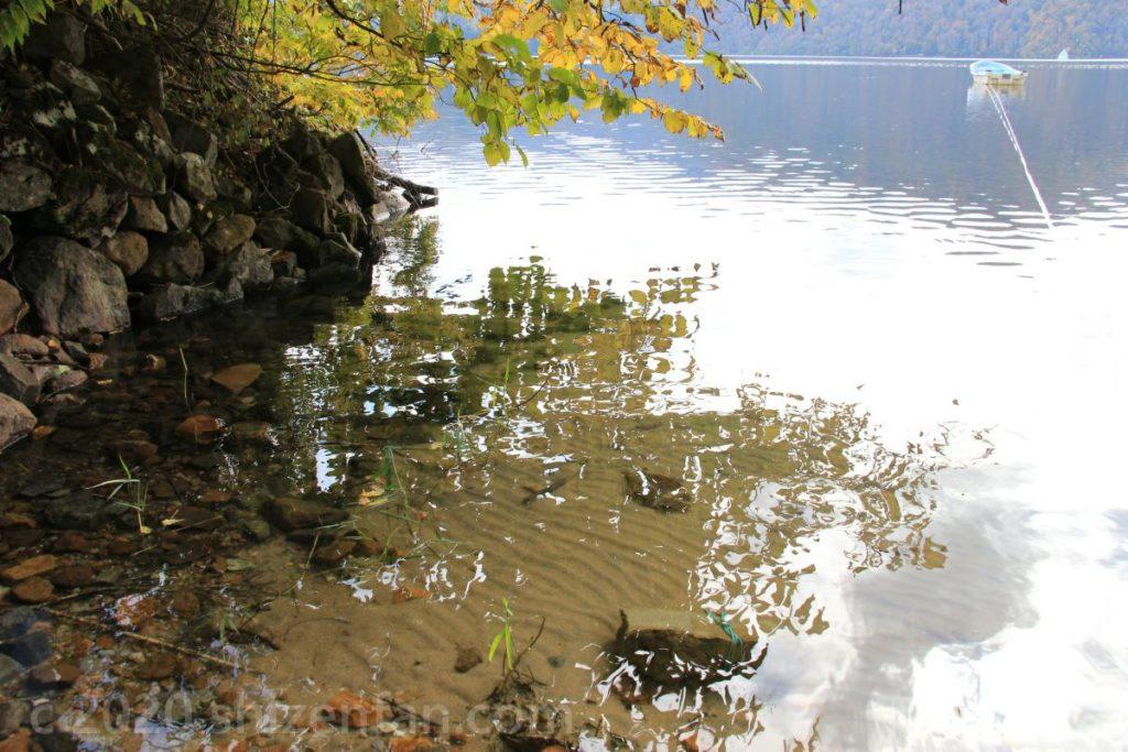 湖面に落ちた木の影と澄んだ水(福島・沼沢湖)