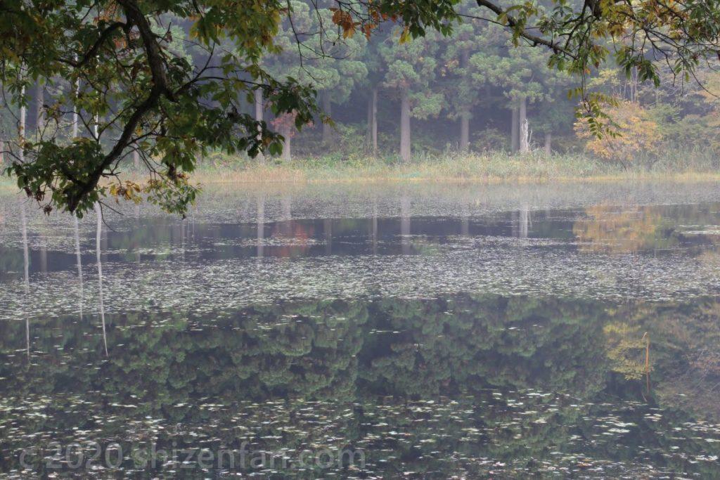 朝霧に包まれた静かな沼の水面