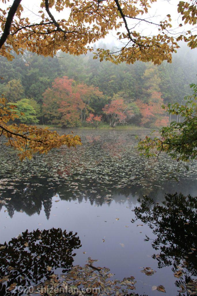 朝霧に包まれた沼の紅葉(木々越し)
