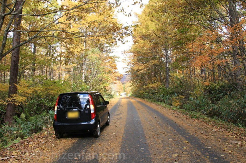 黄金色の紅葉に包まれた道路と黒い軽自動車