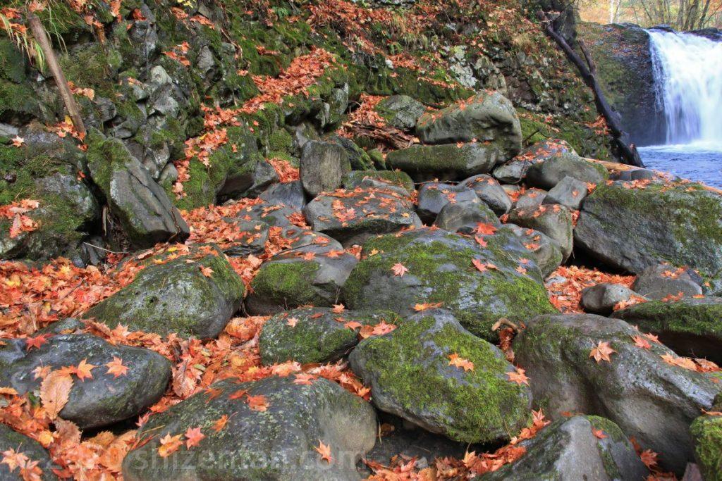 鹿角市大湯・止滝横の岩場に散る無数のモミジの葉