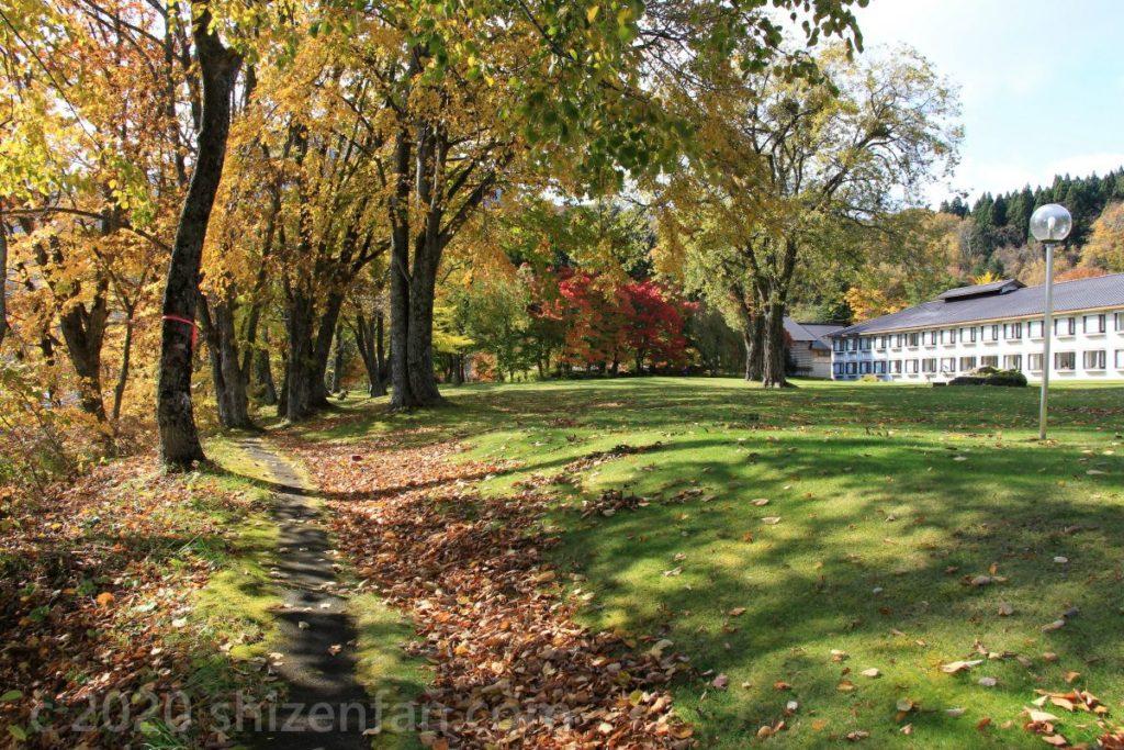 秋の十和田湖西湖畔遊歩道・十和田プリンスホテル裏