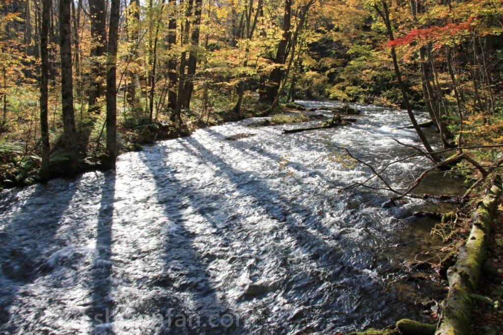 奥入瀬渓流と川面に落ちる木々の影
